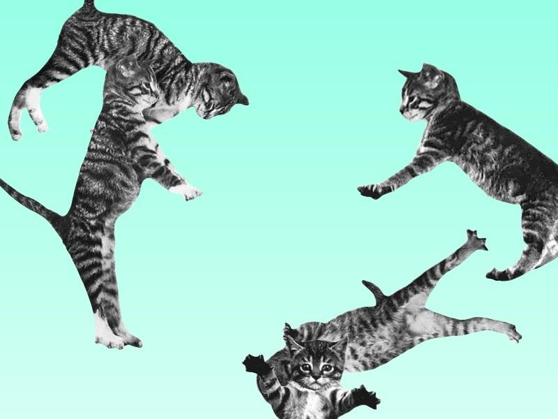 springende_katzen