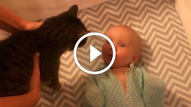 niemand freut sich so sehr ber eine katze wie dieses s e baby. Black Bedroom Furniture Sets. Home Design Ideas