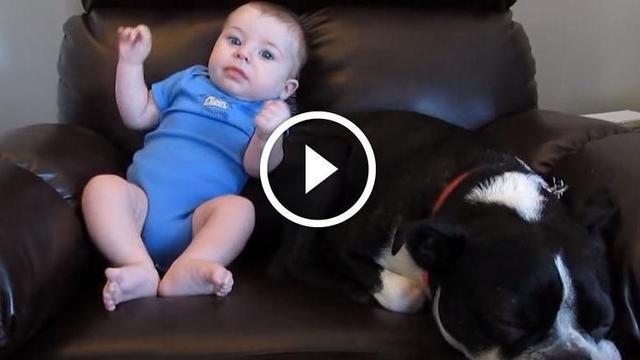 die reaktion des hundes als das baby in die hose kackt. Black Bedroom Furniture Sets. Home Design Ideas