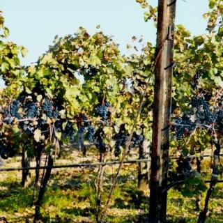 Wie beeinflussen die Herstellungsmethoden den Charakter des Weins?