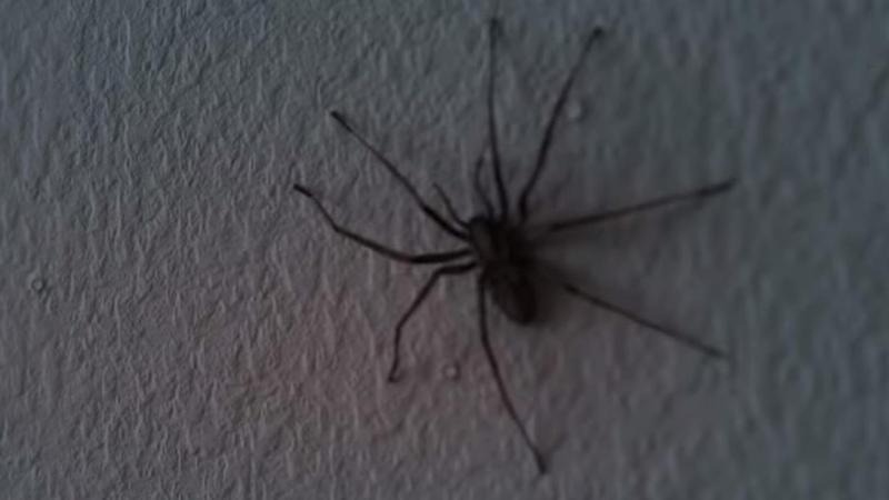 So sieht eine spinneninvasion im wohnzimmer aus - Rotwein an der wand ...