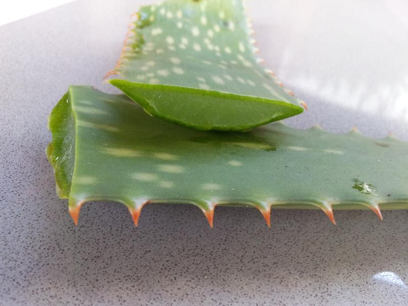 Aloe Vera-Pflanze