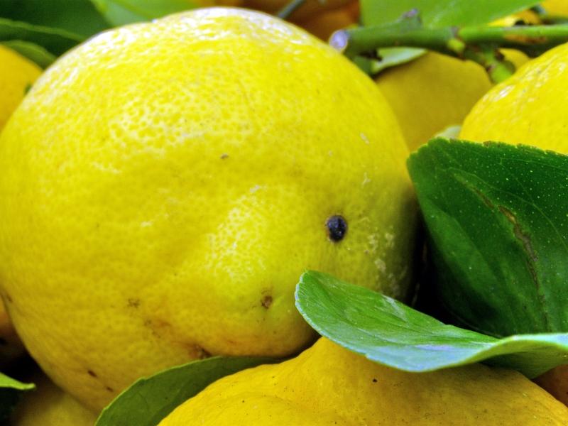 Zitrone hilft