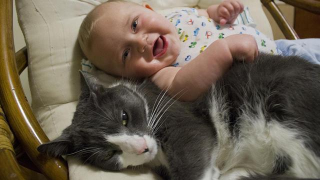 video katze verteidigt baby weil sie glaubt es wird vom vater geschlagen. Black Bedroom Furniture Sets. Home Design Ideas